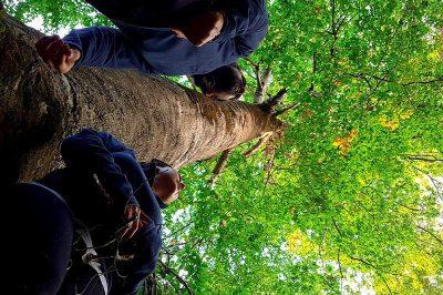 kartepe kuzu yaylasi tabiat parki fotograflari 400x266