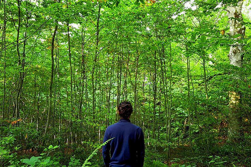 kartepe kuzu yaylasi tabiat parki orman ici