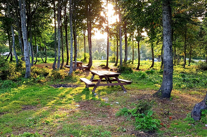 kartepe kuzuyayla tabiat parki piknik alani