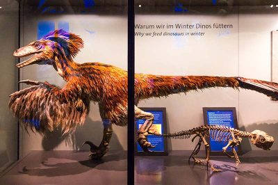 viyana doga tarihi muzesi dinozor kalintilari 400x266