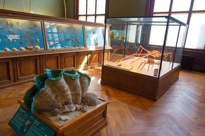 viyana doga tarihi muzesi zooloji salonlari 400x266