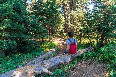 uludag softabogan selalesi orman yolu 400x266