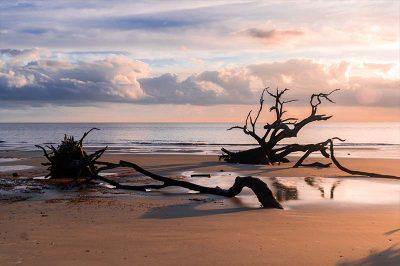 georgia driftwood beach gezilecek yerler 400x266